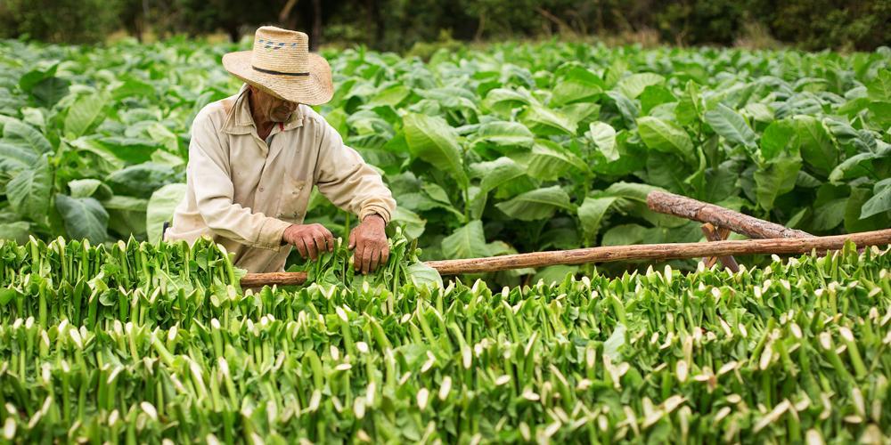 Il National Institutes of Health finanzia uno studio sul controllo del tabacco in Asia